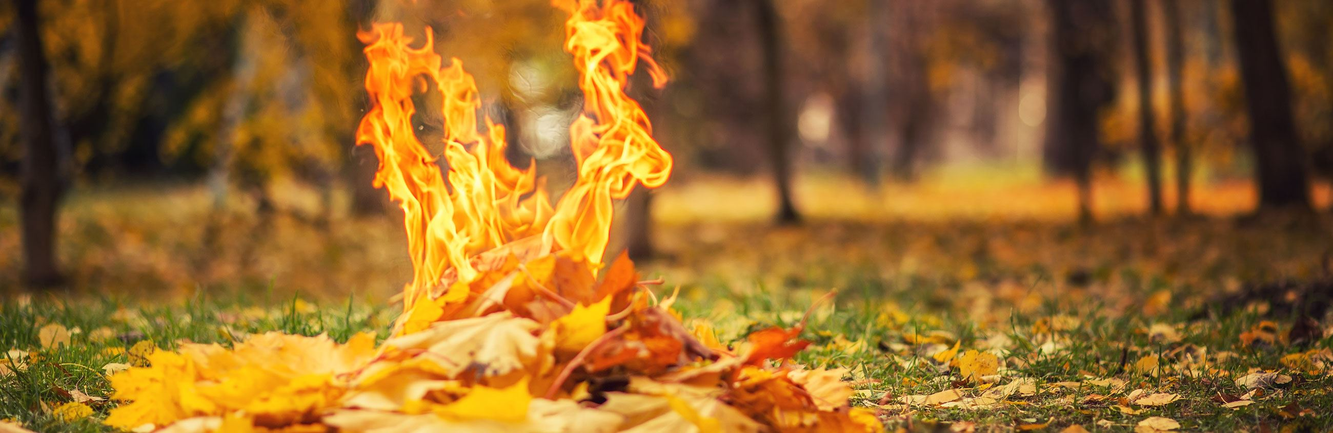 Burning Leaves Outside