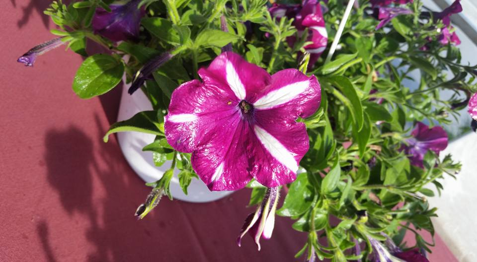 Magenta flower at Farmers Market