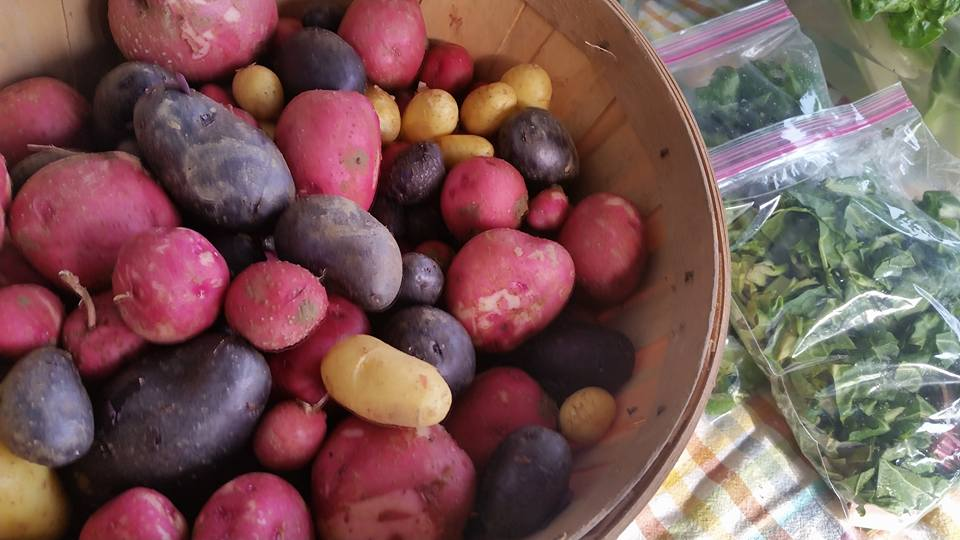 Red potatoes at Farmers Market
