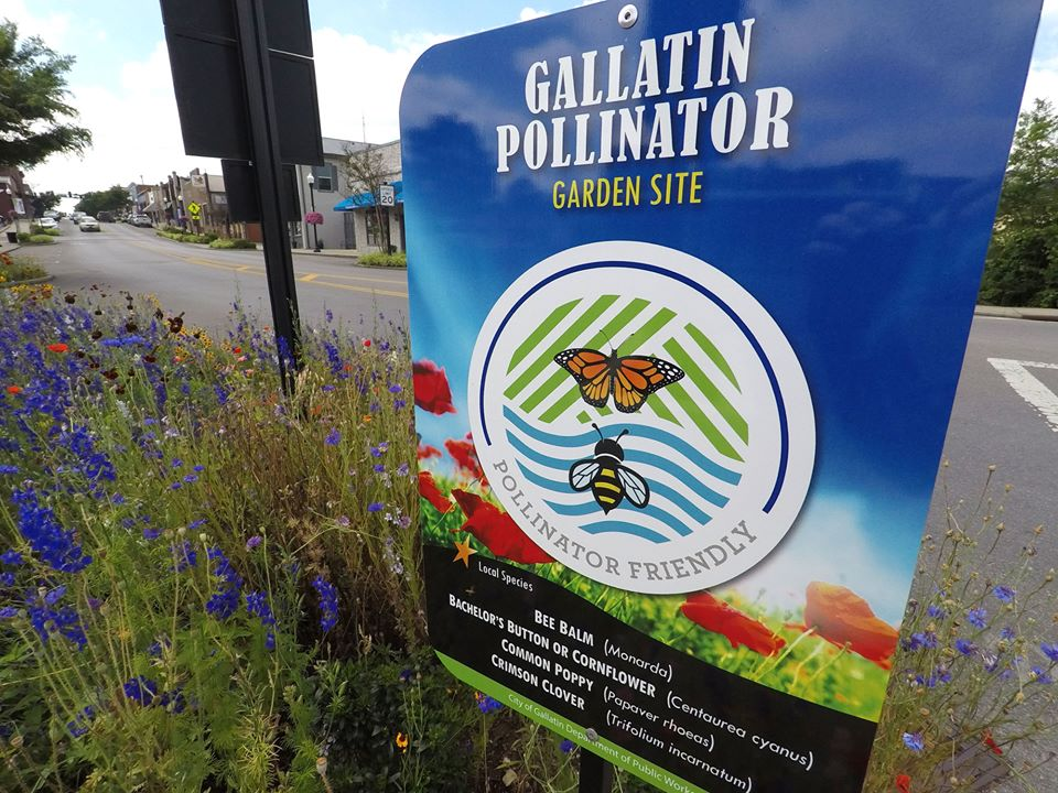 pollinator sign nestles in amongst an array of wildflowers growing in a small downtown setting