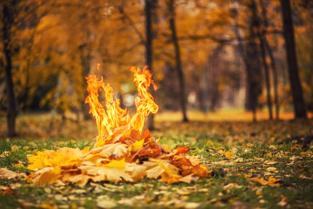 A pile of leaves on fire